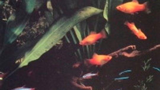 How to Care for Aquarium Fish