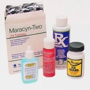 Preventing disease from your aquarium fish is easier than curing it.