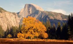 Half Dome is just one of the amazing sights you'll take in as you cruise around Yosemite National Park.