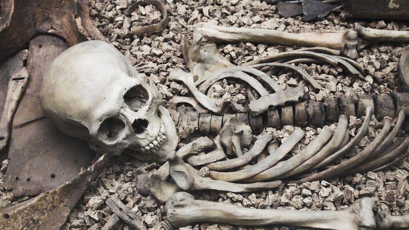 Old bones discovered