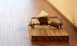 An old-fashioned mouse trap