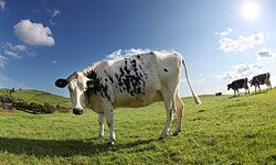 Cows seem harmless enough, but they're actually responsible for 18 percent of greenhouse gas emissions.