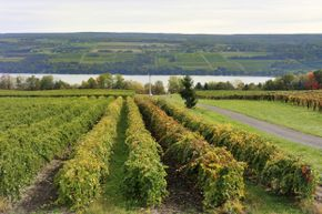 Plan to stop by one of New York's vineyards along the way.