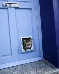 A pet door is a simple addition that your furry pal will appreciate.