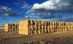 A home built primarily from bales of straw can be stronger than you may think.