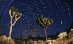 Nighttime at Joshua Tree National Park will stir your imagination.