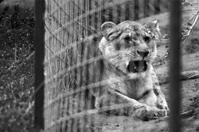 Many circus animals actually have failry nice happy endings after their years of service.