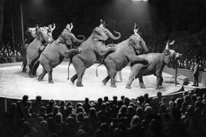 Synchronizing elephants is no easy feat, and the circus industry has cut many corners ethics-wise over the years.