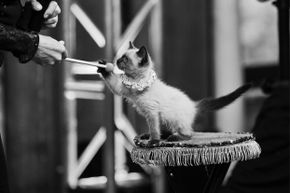 Believe it or not, cats have proven to be reliable (and agreeable) circus talent.