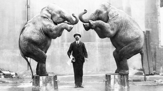 10 Facts About Circus Animals