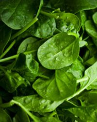 The U.S. spinach industry was crippled with a massive recall in 2006 when it was found that the product could carry a nasty strain of E. coli bacteria.