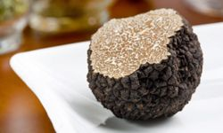 Truffles taste better when they're served close to home. Perigord, France, and Alba, Italy, are great places to go if you're a fan of these fantastic fungi.