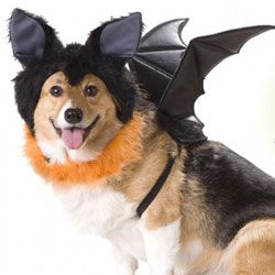 No tricks, just treats, for this adorable pooch!