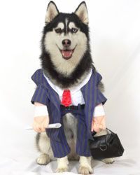 """Looks like he's had a """"ruff"""" day  at the office."""