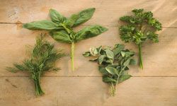 If you're going to Scarborough Fair, add oregano to your list of must-buy herbs.