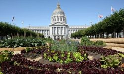 An organic garden at San Francisco's City Hall features leafy greens.