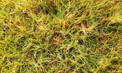 Live in a warm climate? Carpet grass may be for you.