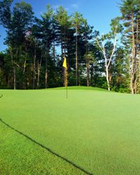Putting greens are usually made of bent grass.