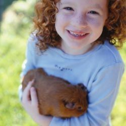 Guinea pigs are usually extremely friendly.