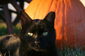 Learn about the origins of your favorite Halloween traditions with these fun facts.