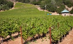 Oenophiles will relish a trip to Napa Valley.