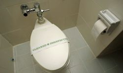 A standard-issue American toilet, freshly cleaned and disinfected, complete with a fresh roll of toilet paper.