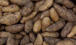 Potatoes are often cut into the oblong tournée shape.