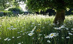 Why not make your yard look like this gorgeous meadow?