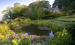 A wildlife pond is an attractive addition to a yard.