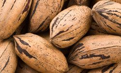 Crack open these pecan shells for a delicious treat.