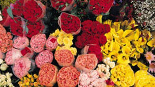 Top 10 Prettiest Flowers