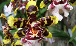 Look closely -- it's an orchid, not a cat!