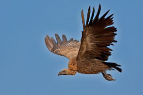 It turns out this seemingly paranormal event may have been nothing more than vulture hork.