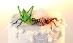 Image Gallery: Cakes from Ultimate Cake Off There's nothing strange about this cake except the grasshopper and cricket perched on the top layer. See more pictures of cakes from Ultimate Cake Off.
