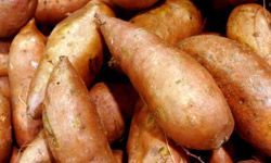 A sweet potato heated in the oven for a few hours can taste like candy, but it still retains its health benefits.