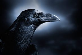 You don't want that crow remembering your face.