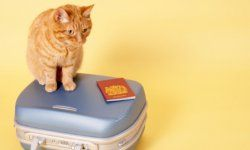 Passport? Check. Suitcase? Check. Wait -- who's going to watch the pets?!
