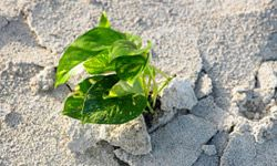 It's not impossible to grow green plants in sandy soil.