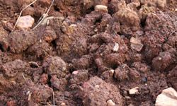 Loam wins the blue ribbon for the best all-around soil.