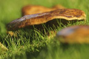 Mushroom aren't always bad news. (Plus, where would the Smurfs live?)
