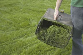 Strike this from your lawn to-do list!
