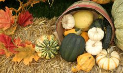 Take advantage of the autumn harvest with gourds, pumpkins and squash that bring some life to your tablescape.