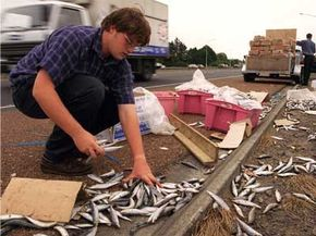 The results from this jackknifed trailer aren't pretty -- in fact, they're fishy.