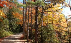 With the coming of autumn to Maine, you'll bike through the changing of the leaves.