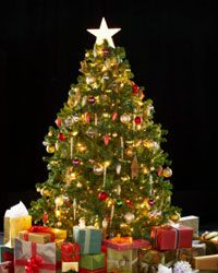 Who can resist a Christmas tree? This beautiful bit of nature has become one of the most popular Christmas decorations.