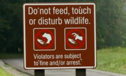 In some places, it's not just a bad idea; it's illegal to feed bears.