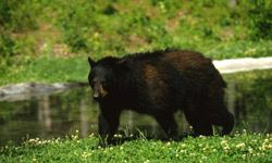 Bears also care about location, location, location (especially when there's food around).
