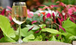 While the actual drink may be your focus, wine gardens also offer stunning arrays of seasonal blooms.