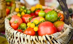 Heirloom tomatoes are a highlight at the Kendall-Jackson gardens -- they grow more than 180 varieties.