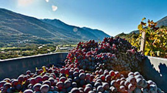 10 Common Wine Additives